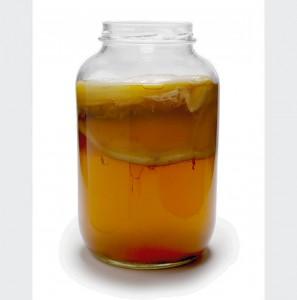 kombucha-fermenting