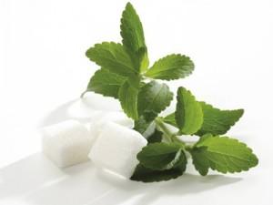 stevia-benefits